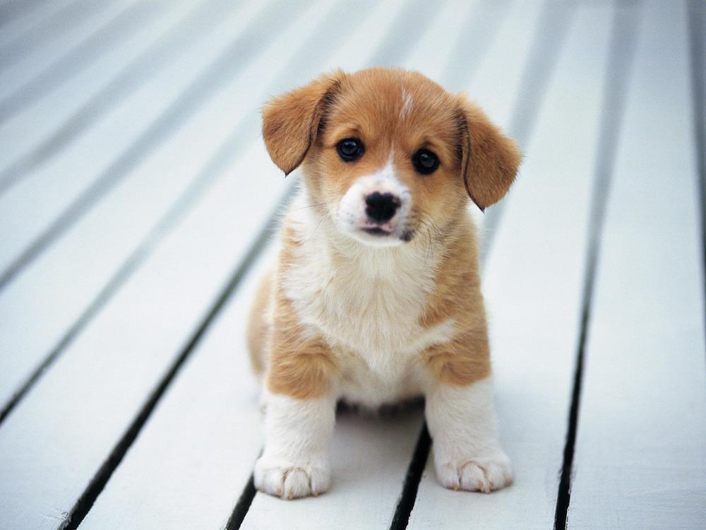 cute-baby-dog